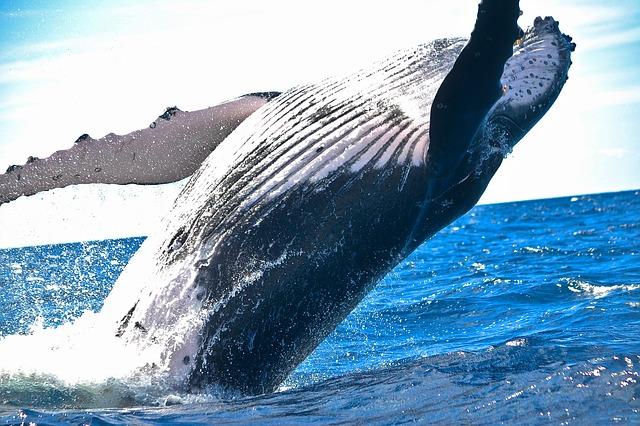 artykuł publicystyka tajemnica pewnego wieloryba