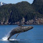 btc wieloryby kryptowaluty whale alert rynek spekulacja bitcoin